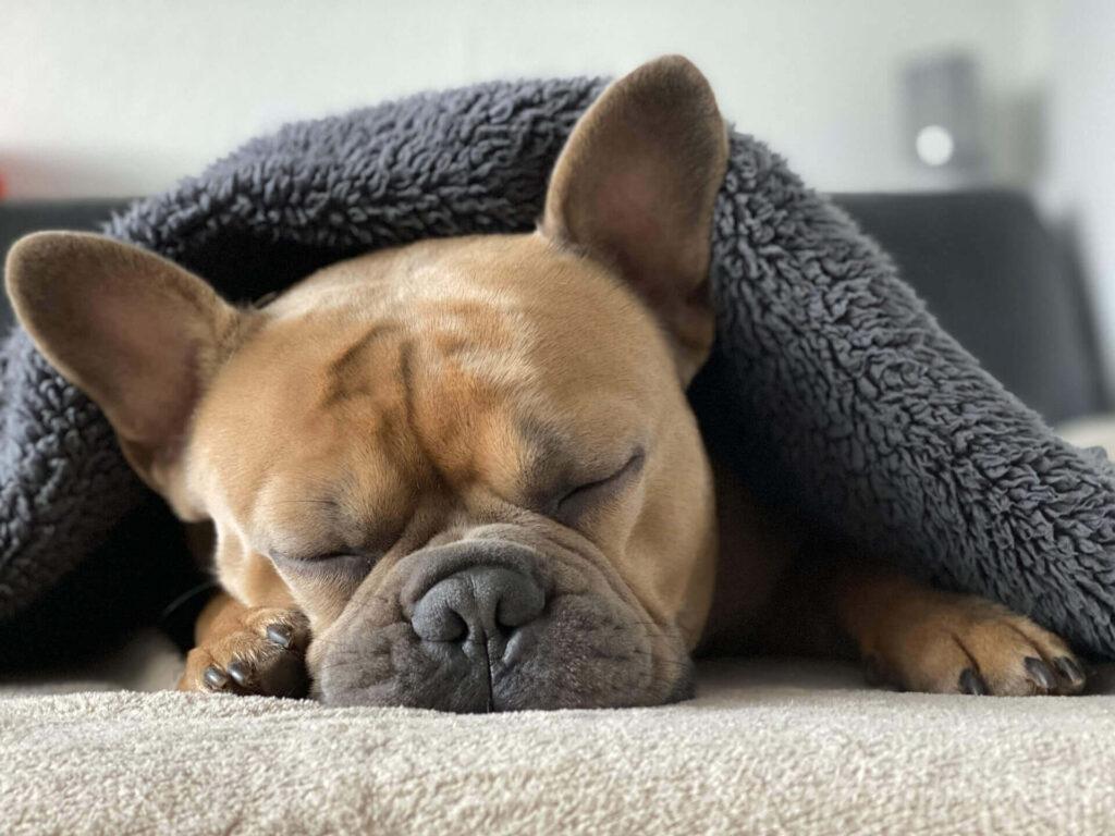 「「sleep 最高の脳と身体をつくる睡眠の技術」の内容を要約」のまとめ