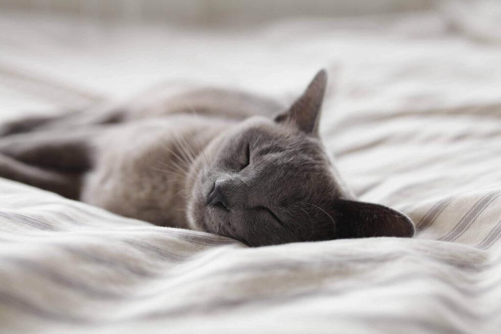 書籍「睡眠こそ最強の解決策である」とは?著者はどんな人?