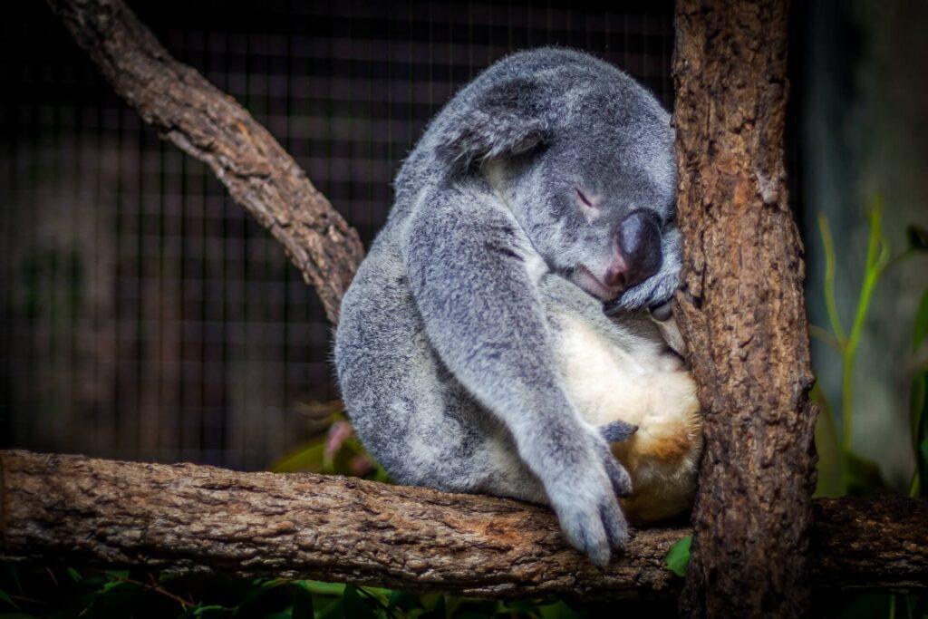「「睡眠こそ最強の解決策である」からおすすめの習慣を要約」のまとめ
