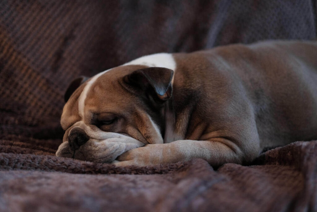 「「眠る投資 ハーバードが教える世界最高の睡眠法」を解説」のまとめ